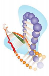 CRISPR-Cas9 editing