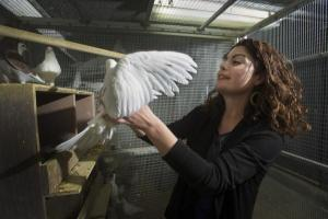 Biologist Rebecca Calisi with a pigeon