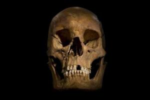 The skull in the parking lot. Credit: University of Leicester.