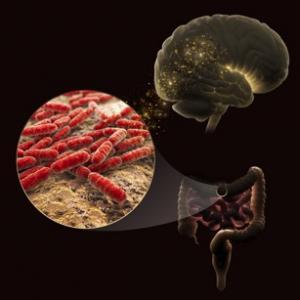 Gut microbiome iIllustration
