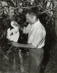 Perlman in 1955