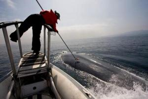 Tagging a blue whale