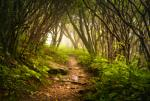 Forest image via Shutterstock